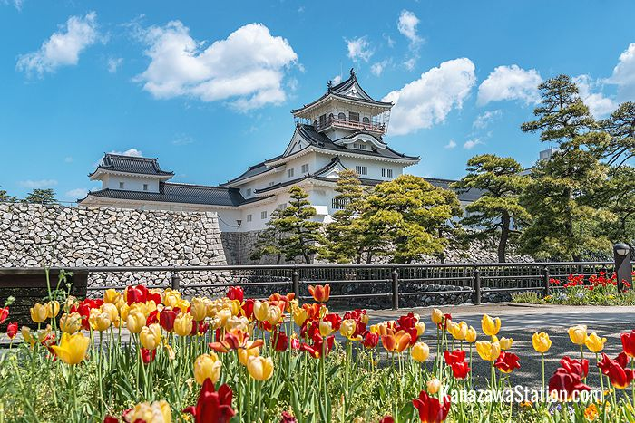 Blooming tulips at Toyama Castle